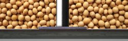 Argentina's Rush to Crush Soybean