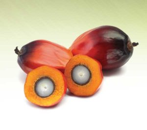 coverstory-palm-fruit
