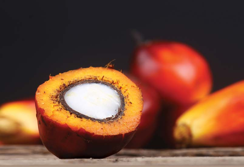 Trust in the Malaysian Palm Oil Brand